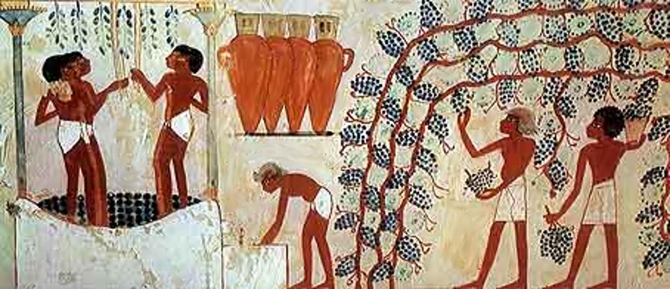 I Primi a metter l'Etichetta sul Vino sono stati gli Egiziani!