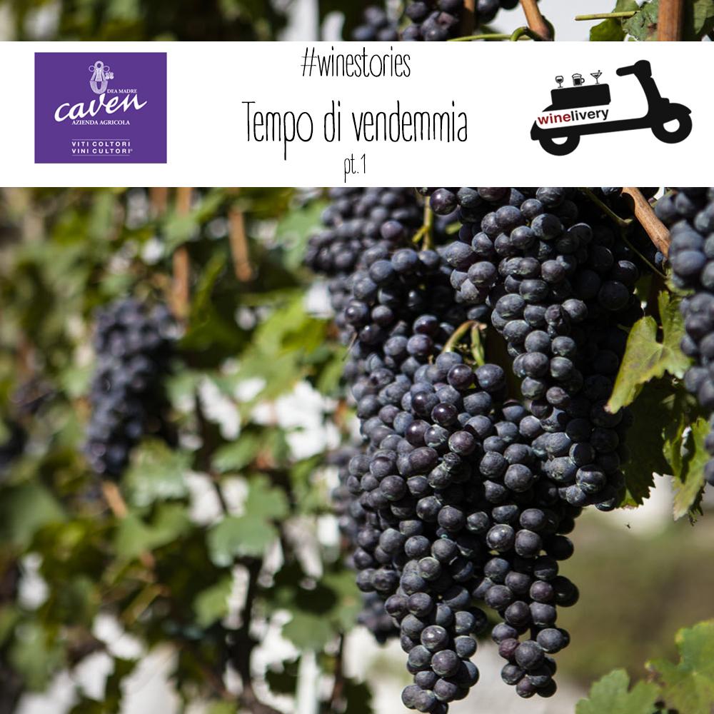 #winestories – Caven, la storia della Vendemmia, prima parte