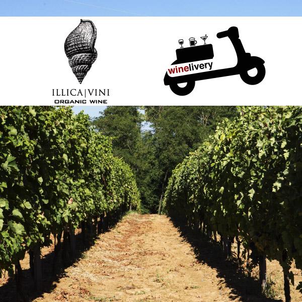 Vini Illica: il biologico piacentino