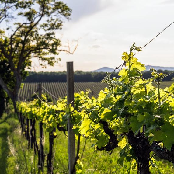 Cantina 366, dalla passione all'evoluzione del vino