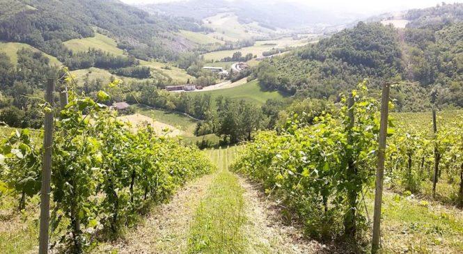 Vigna Cunial, l'eccellenza del vino biologico