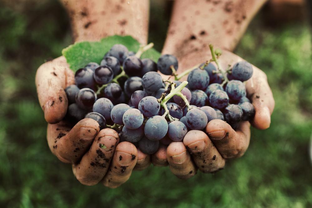 Alla scoperta dei Vini Bio! Le 4 curiosità che probabilmente non sai sui vini a certificazione biologica.