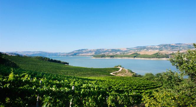 Che cosa sai della DOC Biferno? 4 curiosità legate a uno dei più antichi vini d'Italia